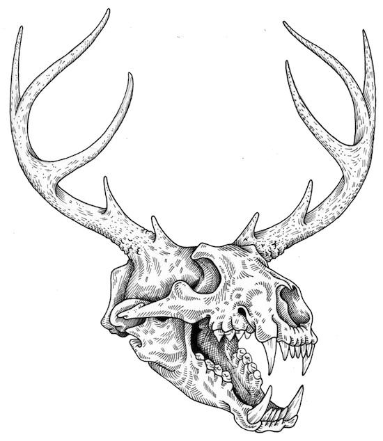 Bear Skull Drawings Illustration Of Alex Carlson
