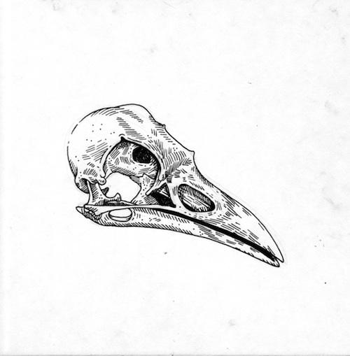 Skull Line Drawing Tattoo : Bird illustration of alex carlson